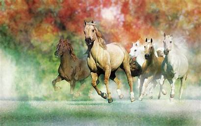 Horse Desktop Wallpapers Horses Animals Awesome Galloping
