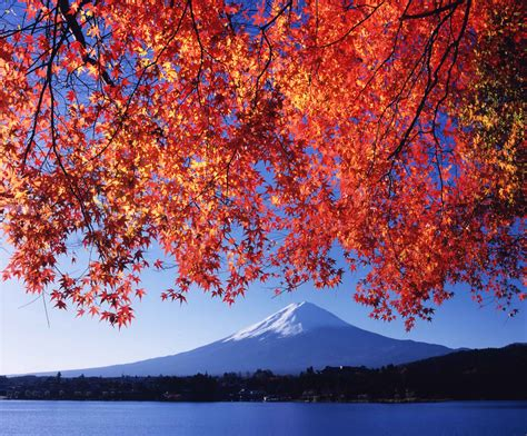 japan seasons  japan bunnik tours