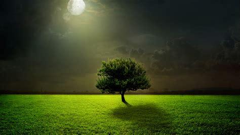 Wallpaper Moon Light, Full Moon, Tree, Landscape, 4k