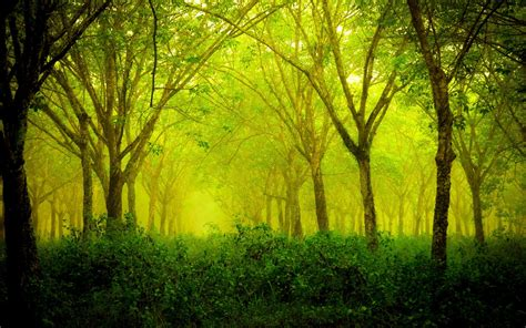 Green Forest Backgrounds by Forest Green Nature Landscape Wallpapers Hd Desktop