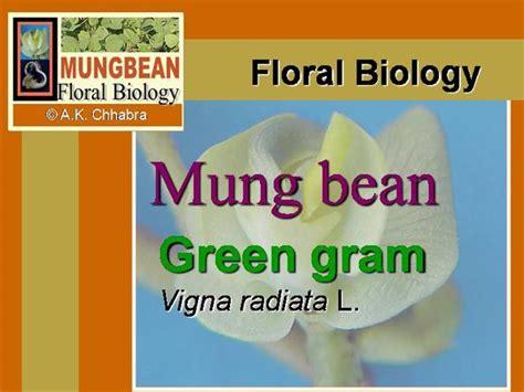 Diagram Of Flower Plant