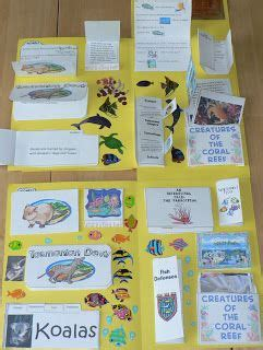 australia and coral reefs combined three homeschool lapbooks marsupials coral reef and