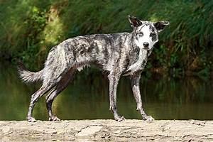 Euphrasia für hunde