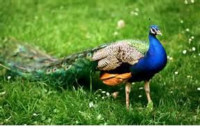 Most Beautiful Birds O...
