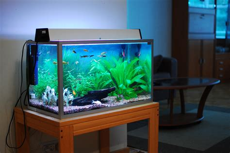 how to move fish tanks your local movers
