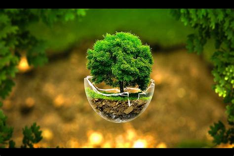 Little Trees High Resolution Nature Wallpapers