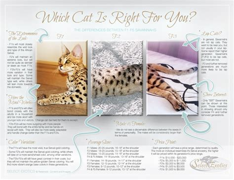 Which Savannah Cat Is Right For You?  Select Exotics