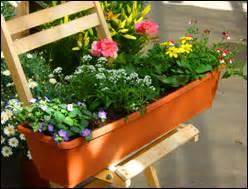 pflanzen versand harro39s pflanzenwelt kaufen bestellen With garten planen mit zimmerpflanzen versand online bestellen