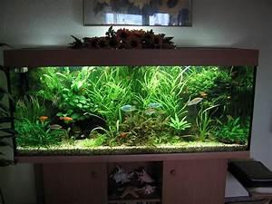 Aquarium Einrichten Beispiele : habt ihr ideen zur umgestaltung aquarium forum ~ Frokenaadalensverden.com Haus und Dekorationen