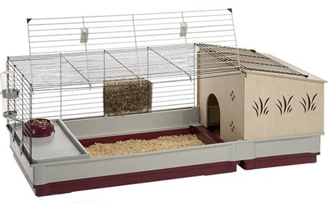 guinea pig hutch size guinea pig cage size guide the best homes for guinea pigs