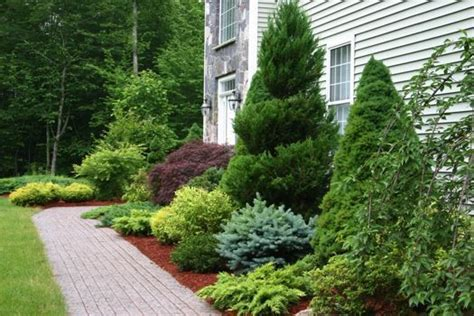 trees to plant to house foundation evergreen foundation planting via ir landscape and design garden pinterest ideas sun