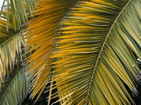 waving  palms uuaorg