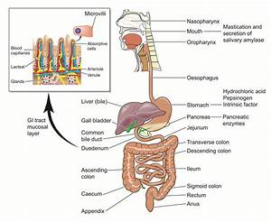 Children's Digestion Images — Dr. Mona Dave, Pediatric ...