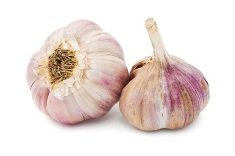 garlic plant structure garlic matters