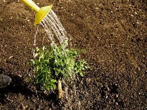 Beste Zeit Zum Tomaten Pflanzen : herbst zeit zum pflanzen zuhause wohnen ~ Lizthompson.info Haus und Dekorationen