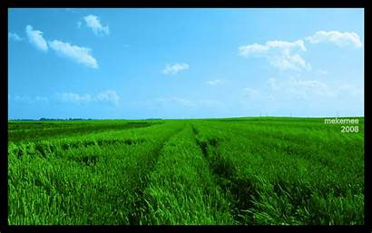 Fields Field Wallpapers Crops Mobile Snap Which