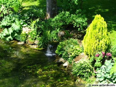 fenouil cuisiner plantes du bassin