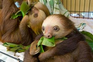 Costa Rica Closes Zoos U2014where Will The Animals Go