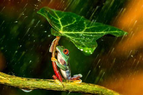 雨 蛙 に対する画像結果