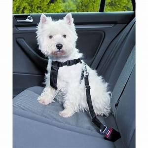 Voiture Pour Chien : trixie harnais pour voiture pour chien achat vente kit attache sellerie ceinture de ~ Medecine-chirurgie-esthetiques.com Avis de Voitures