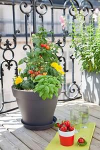 Pot Pour Balcon : planter des tomates cerises en pot comment faire c t maison ~ Teatrodelosmanantiales.com Idées de Décoration