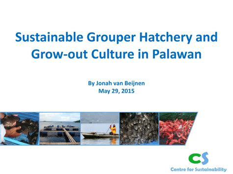 palawan hatchery sustainability fins grouper sustainable philippines grow leaves culture centre