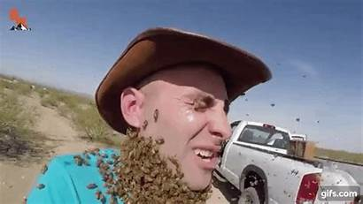 Coyote Bee Peterson Beard Sting Bees Swarm