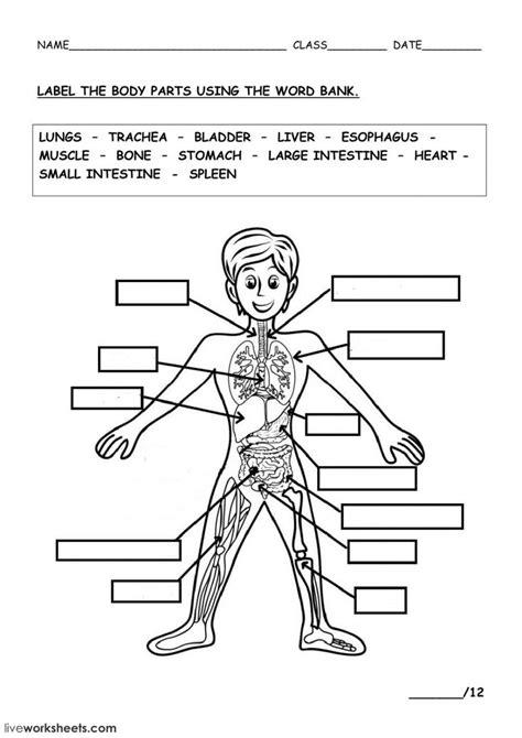 human body interactive worksheet en