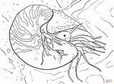 Nautilus Coloring Chambered Pages Pompilius Cuttlefish Printable Supercoloring Fish Colouring Squid Octopus Sketch Template Animal Designlooter sketch template