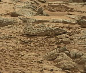 INQUISITION NEWS: Crested Lizard Photographed On Mars by ...