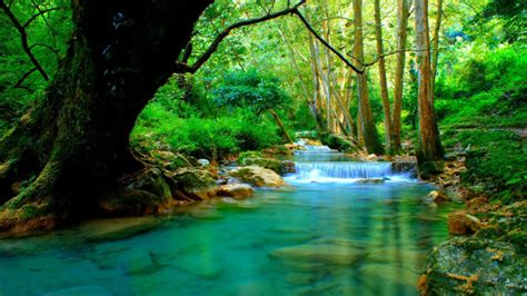 Forest River With Cascades Turquoise Water Rocks Trees