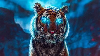 Tiger Wallpapers Glowing Eyes Desktop 4k Tigre