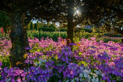 flower garden background high quality  backgrounds
