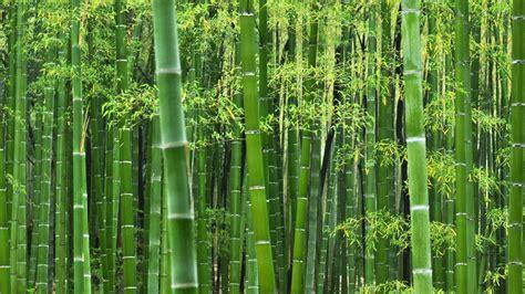 Winter Wallpapers Free Download Free Hd Bamboo Wallpapers Pixelstalk Net
