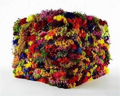 Flowers Azuma Makoto Decomposition Box Using Stages