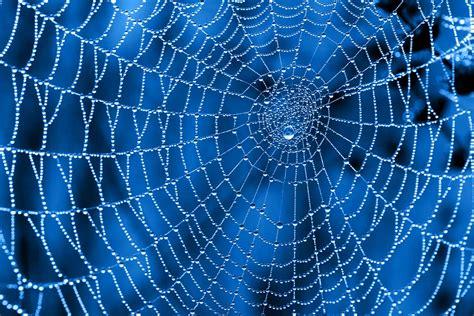 How Do Spiderwebs Help Skydivers?  Pitara Kids Network