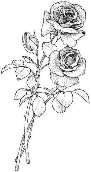 Roses by Makia55   Rose sketch, Roses drawing, Floral drawing