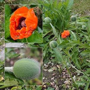 Blumen Im November : tr umerle blumen im november ~ Lizthompson.info Haus und Dekorationen