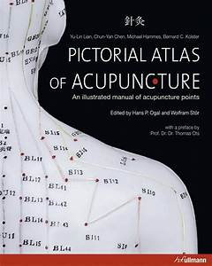 Amazon Com   Male Acupuncture Model 20 U0026quot  With Chinese And