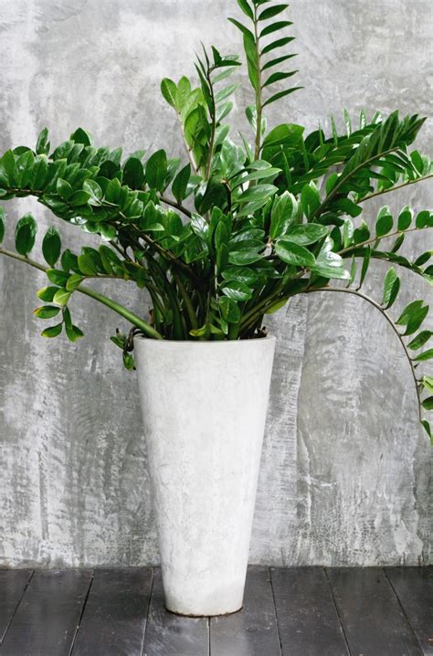 grow ls for indoor plants potted freshen up houseplants