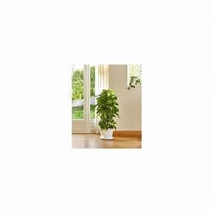 Grande Plante D Intérieur Facile D Entretien : plante facile d 39 entretien liste ooreka plante d ~ Premium-room.com Idées de Décoration