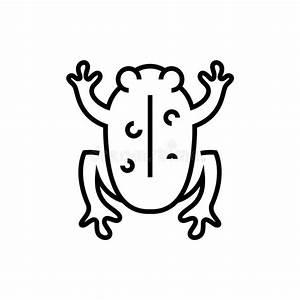 Frog Circulatory System Stock Illustration  Illustration