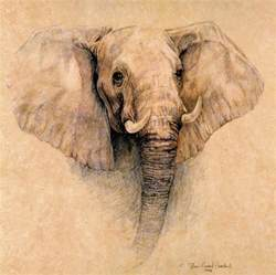 African Elephant Drawings