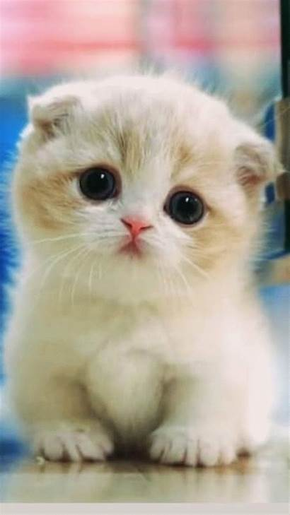 Kittens Cutest Animals Cats Funny Adorable Cat