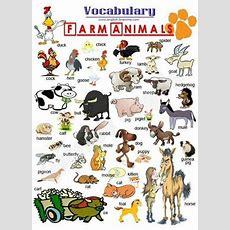 Farm Animals  English Vocabulary Pinterest