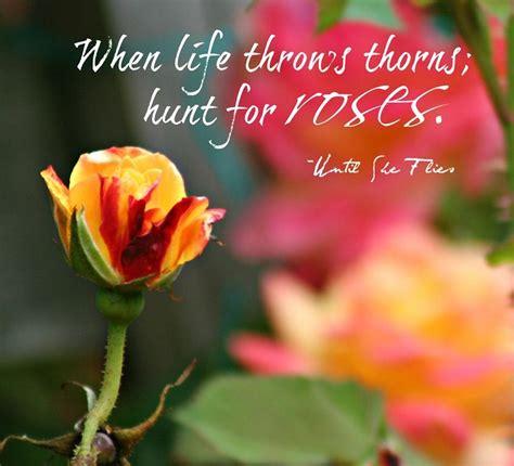 beautiful rose quote roses  rose quotes flower