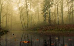 calm, landscape, mist, forest, morning, trees, leaves ...
