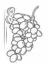 Coloring Grapes Pages Grape Fruits Fruit Template Printable Recommended Favorite Mycoloring sketch template