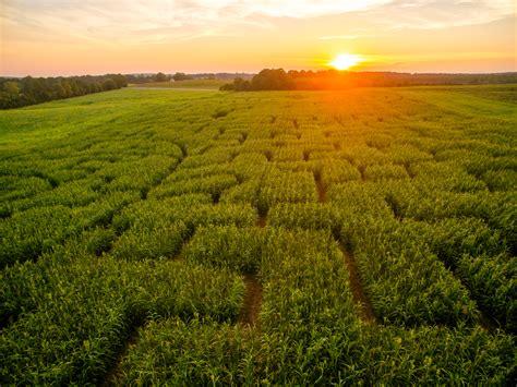 Corn Maze - Lynchburg, Rustburg, Central Virginia - Yoders ...