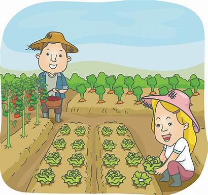 Clipart Garden Vegetable Harvest Vegetables Harvesting Harvested
